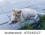 Homeless Ginger Cat Lying On...