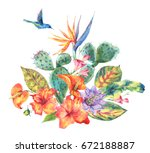 exotic natural vintage summer... | Shutterstock . vector #672188887