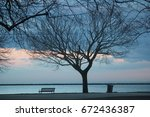 lonely tree | Shutterstock . vector #672436387