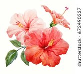 Stock photo watercolor tropical flower red and delicate pink hibiscus with leaves and bud flowery hawaiian 672490237