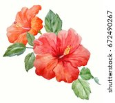 watercolor tropical flower red... | Shutterstock . vector #672490267