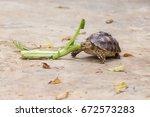 sulcata tortoise  african... | Shutterstock . vector #672573283