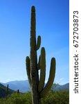 Cactus In Oaxaca  Mexico