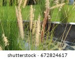 grass flower | Shutterstock . vector #672824617