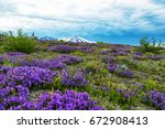 paradise of wildflowers  mt... | Shutterstock . vector #672908413