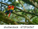 two beautiful parrot on tree... | Shutterstock . vector #672916567