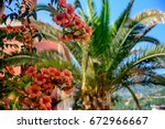 Small photo of Red flowers Oleandra against the backdrop of a palm tree.
