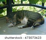 Grey Striped Cat Sleeping In...