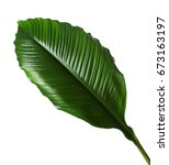 large leaves of spathiphyllum... | Shutterstock . vector #673163197