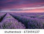 lavender fields. beautiful... | Shutterstock . vector #673454137