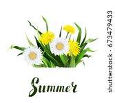 lettering summer chamomile herb ... | Shutterstock .eps vector #673479433