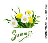 lettering summer chamomile herb ... | Shutterstock .eps vector #673486453