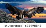 big gyps carnivore bird with...   Shutterstock . vector #673498843