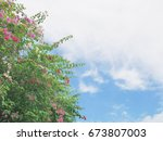 Bougainvillea Tree With Pink...
