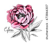 pink peony flower with leaves.... | Shutterstock .eps vector #673866307