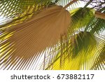 Small photo of Beautiful in green pattern leaf, Get along with the nature and the life will be happy