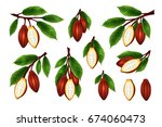 cocoa beans branches collection.... | Shutterstock . vector #674060473