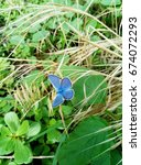Small photo of Wonderful blue butterfly in nature, Lycaenidae, Polyomathus icarus. Filter