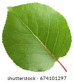 apricot leaf isolated on a... | Shutterstock . vector #674101297