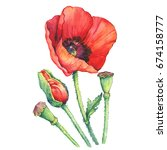 red poppies flowers with a bud  ... | Shutterstock . vector #674158777