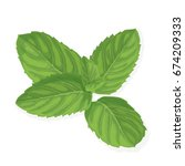 mint leaf. realistic vector... | Shutterstock .eps vector #674209333