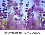 lavenders flowers. ontario ... | Shutterstock . vector #674220607