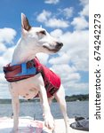 Small photo of Wide angle curious white terrier dog looking to side standing wearing life jacket on stern of motor boat with bright blue sky with clouds and lake shore in background of summer afternoon boating scene