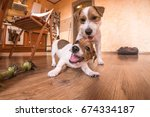 playful dogs indoors at home | Shutterstock . vector #674334187