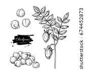 chickpeas hand drawn... | Shutterstock . vector #674452873