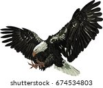 bald eagle   detailed vector... | Shutterstock .eps vector #674534803