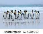 group of king penguins coming... | Shutterstock . vector #674636017