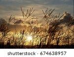 grass blossoms silhouette front ... | Shutterstock . vector #674638957