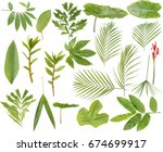 set of tropical leaves isolated ... | Shutterstock . vector #674699917