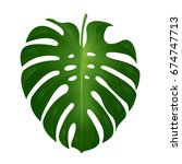 monstera  leaf  vector... | Shutterstock .eps vector #674747713