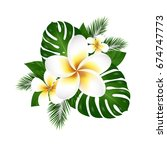 plumeria  vector illustration ... | Shutterstock .eps vector #674747773