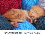 new born baby cat sleeping.... | Shutterstock . vector #674787187