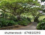 path under a tree in waimea...   Shutterstock . vector #674810293