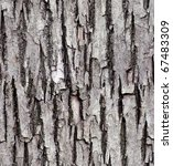 Old Lime Tree Bark Seamless...