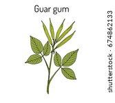 guar gum  cyamopsis... | Shutterstock .eps vector #674862133