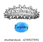 trepang ink sketch. isolated on ... | Shutterstock .eps vector #674927593