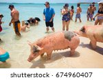usa. bahamas. pig beach. july ... | Shutterstock . vector #674960407