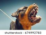 Ferocious Rottweiler Barking O...