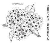 bouquet of hydrangea flowers... | Shutterstock .eps vector #675045883