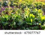 organic garden closeup | Shutterstock . vector #675077767