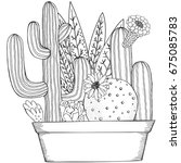 hand drawn set of succulents or ... | Shutterstock .eps vector #675085783