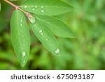 morning dew or rain on the... | Shutterstock . vector #675093187