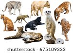 set of wild mammals isolated... | Shutterstock . vector #675109333