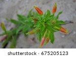 Green Plant With Orange...