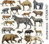 wild gorilla  moose or eurasian ... | Shutterstock .eps vector #675208747