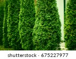 green hedge of thuja trees ... | Shutterstock . vector #675227977